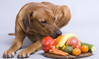 Vitamin D Toxicity in Dogs: What You Should Know - The Howl